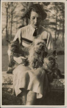 CAIRN TERRIER GROUP WITH WOMAN REAL PHOTOGRAPHIC DOG POSTCARD