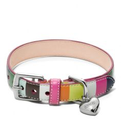 The Printed Legacy Stripe Leather Collar from Coach- now that is what I call a dog collar!!!!