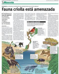 infografia de fauna silvestre - Buscar con Google