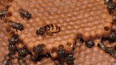 O que faz o mel ser 'eterno' e não estragar?