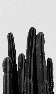 Black Wallpaper Bedroom Cactus Crowd Black and White Collage Mural, Collage Foto, Bedroom Wall Collage, Photo Wall Collage, Artwork Wall, Bedroom Posters, Wall Posters, Music Posters, Photo Canvas