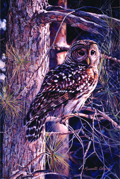 Cobane Studio: Looking at You 09 x 14 (inches) print size wrapped canvas Giclee Print; owl; copyrighted artwork