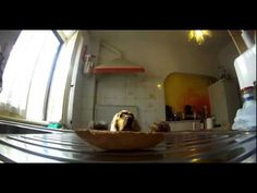 Dog Looks Over Shoulder As Steals Bread - YouTube