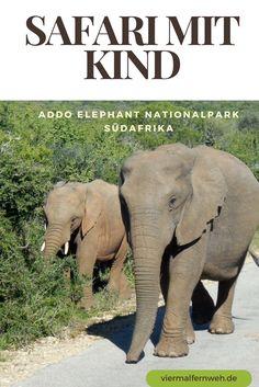 Eine Safari durch den Addo Elephant Nationalpark ist ein riesiges Abenteuer für die ganze Familie. Hier kannst Du mit etwas Glück sogar die Big 7 sehen. #Südafrika #Safari #Nationalpark #Familenreise #Reisetipp #ReisenmitKind