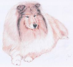 Collie enjoying the sun; drawing with pastel pencils on white paper (size Sun Drawing, Drawing Style, Pastel Drawing, Animal Drawings, Art Drawings, Pastel Pencils, Enjoying The Sun, White Paper, Paper Size