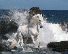 wild horse photography  animalpictures5