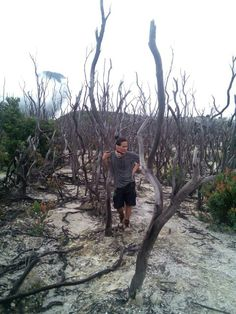 Hutan mati @mt.papandayan