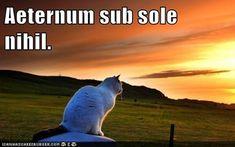 Aeternum sub sole nihil. Nothing under the sun is eternal.