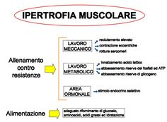 Parametri ipertrofia muscolare