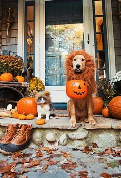 Friends and Pets Halloween 2016
