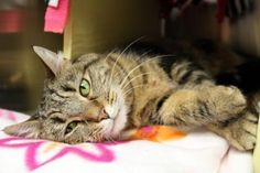 Update: Adopted :-) Bella has been adopted from the Seattle Humane Society