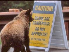 """-baby bear thought to himself, """"oh dear, I'm gonna have to be on the lookout for bears."""""""