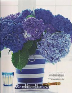 the bluest hydrangea I've ever seen