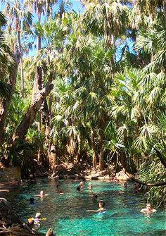 Mataranka bitter springs thermal pools, Katherine, Northern Territory, Australia