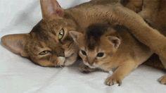 gifs de gatinhos - Pesquisa Google