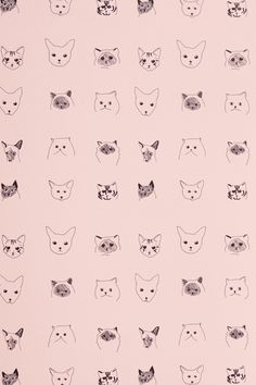 Cats Wallpaper - Anthropologie.com