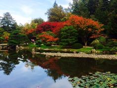 These 4 Vibrant Japanese Gardens In Washington Are Picture Perfect Seattle Japanese Garden, Japanese Garden Plants, Japanese Garden Design, Japanese Gardens, Seattle Washington, Washington State, Evergreen State, Tour Tickets, State Parks
