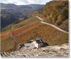 """Weingut Pojer e Sandri  Die Weinberge von Pojer e Sandri  Pojer e Sandri wurde 1975 von Fiorentino Sandri und Mario Pojer gegründet. Ihr Ziel war es in der Umgebung von Faedo Weine von höchster Qualität zu produzieren. Schon die ersten Weine – ein exquisit duftender Müller-Thurgau, ein bodenständiger """"Nosiola"""" und ein gefeierter Chardonnay – erregten viel Aufmerksamkeit."""