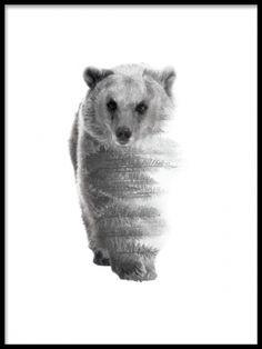 Forest bear B&W, plakater med dyr. Fin sorte og hvide plakater. Poster med sort og hvid fotografering. Posters. www.desenio.dk