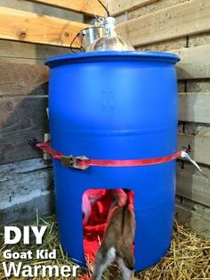 Kid warmer: A 55 gallon FOOD GRADE plastic barrel. Cut a hole the diameter of a heat lamp in the top lid leaving enough to run 4 screws through the rim of the metal lampshade into the top of the barrel. Be sure the bulb won't be touching the plastic. Goat Playground, Goat Shelter, Goat Pen, Goat House, Goat Care, Nigerian Dwarf Goats, Raising Goats, Goat Farming, Baby Goats