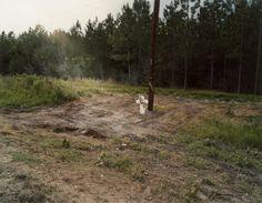 Sam Taylor-Wood Deep South