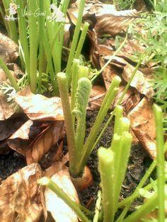 Cum se tund morcovii - magazinul de acasă Vegetable Garden, Garden Plants, Asparagus, Homesteading, Good To Know, Garden Design, Avocado, Vegetables, Gardening
