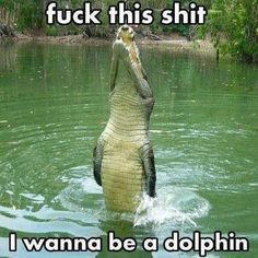 awww it's flipper!