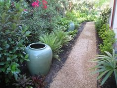 Decomposed Granite Path, Tropical Plants Walkway and Path Down to Earth Landscapes Santa Barbara, CA Little Gardens, Back Gardens, Small Gardens, Outdoor Gardens, Tropical Landscaping, Tropical Garden, Tropical Plants, Garden Landscaping, Landscaping Ideas