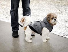 Review: Canada Fouse Coat by FouFou Dog Photo