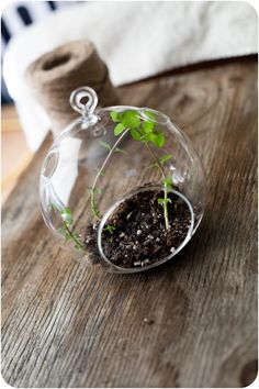 hanging mint garden - made from a small tea light holder but co also has a little larger hanging terrariums and vases that could be used.