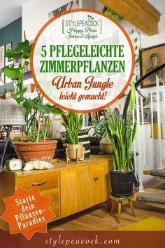 Die 5 besten pflegeleichten Zimmerpflanzen stelle ich euch hier vor. Du suchst Pflanzen, die etwas hermachen und auch ohne grünen Daumen nicht eingehen? Hier gibt's tolle Tipps! Starte deinen Urban Jungle >>> [beinhaltet unbezahlte werbung/affiliate links] #urbanjungle #easyplants #zimmerpflanzen #pflanztipps #monstera #bogenhanf #grünlilie #gummibaum #plants #die besten #zimmerpflanzen #grünerdaumen Bohemian Living, Boho, Midcentury Modern, Mid-century Interior, Interior Design, Modern Home Furniture, Hygge, Newlyweds, Lifestyle Blog