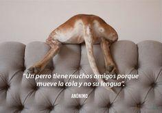 perros-13