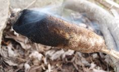 5 Survival Uses for Cattail Fluff