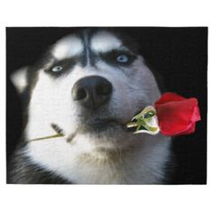 Husky and Rose Valentine/Tango Dog Jigsaw Puzzles, Cards, Mugs, Phone Covers