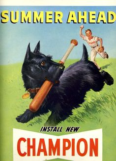 vintage black scottish terrier dog 1948 advertisement baseball