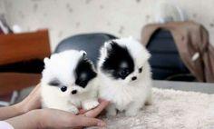 Gêmeos #animais #cute #timbeta
