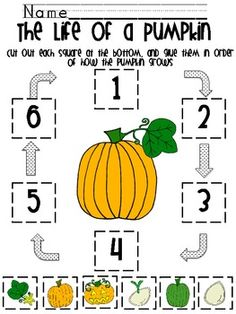 Awesome!!! 9 pages! Life Cycle of a Pumpkin and Apple Unit