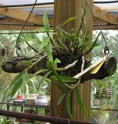 Las orquídeas de Iván Arroyo. My orchids in Basque Country: Nuevas ideas para montar tu orquídea sobre un soporte
