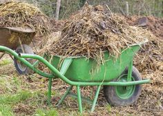 Did you know that you can compost chicken manure into good, garden-ready black gold.in just 18 days? Here's the detailed method for hot composting manure. Organic Fertilizer, Organic Farming, Organic Gardening, Horse Manure, Acid Loving Plants, Growing Grass, Compost Tea, Leafy Plants, Weed Seeds