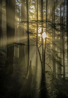Into the light by Carlos Rojas on 500px