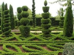 Topiary is a way of making sculpture from living plants. By training and clipping you can make bold, often imposing structural shapes, including 'walls' and arches. You can also create birds and animals, trains, chess sets or simply cones, ball shapes as spirals, which can create formality or points of interest in even the smallest