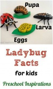 Ladybug Facts for Kids by Preschool Inspirations