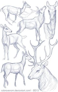 Animal sketches, animal drawings, pencil drawings, how to draw deer, how . Deer Drawing, Drawing Poses, Painting & Drawing, Drawing Tips, Drawing Drawing, Drawing Studies, Drawing Ideas, Matte Painting, Art Studies