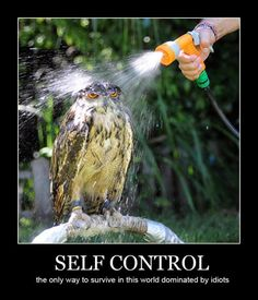 Self Control. SELF CONTROL the only way to survive in this world dominated by idiots Funny Owls, Funny Bunnies, Funny Animals, Cute Animals, Crazy Animals, Funniest Animals, Wild Animals, Haha, Demotivational Posters