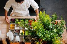 Rawmazing ~~ RAW food blog