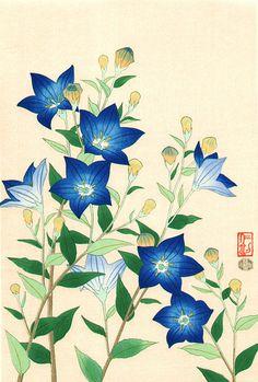 Itou Nisaburou (1910-1988) 伊藤仁三郎 Chinese Bellflower  桔梗、1950