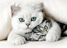 cats - Pixdaus@Marlene Crookston Willis@Susannah Crookston