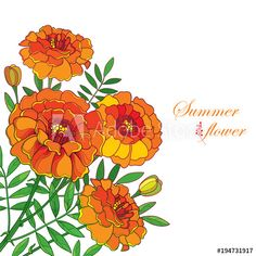Vector corner bouquet with orange Tagetes or Marigold flower, bud and leaf isolated on white background. Ornate Marigold flower in contour style for summer design or Mexican Day of the dead. - Buy this stock vector and explore similar vectors at Adobe Stock Flower Designs For Painting, Watercolor Flowers, Watercolor Art, Meditation Room Decor, Farm Logo, Marigold Flower, Summer Design, Silhouette Art, Flower Tutorial