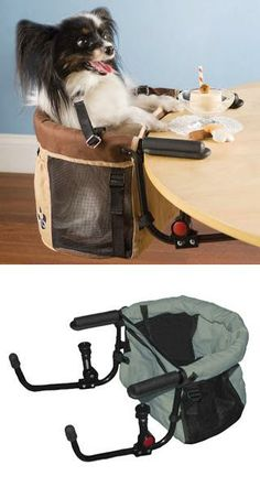 Unusual Design Ideas for Pets, Tote Bags, Strollers and Carriers for Small Pets-so cute!