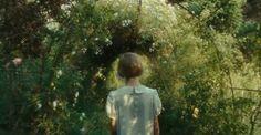 "nightimethinker: ""In to the woods we go """